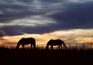 Lóhamvasztás: Nálunk lovától is méltó körülmények között búcsúzhat!