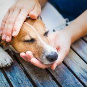 kutyahamvasztás Budapesten