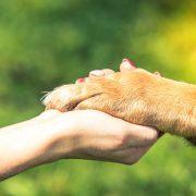 Állathamvasztás