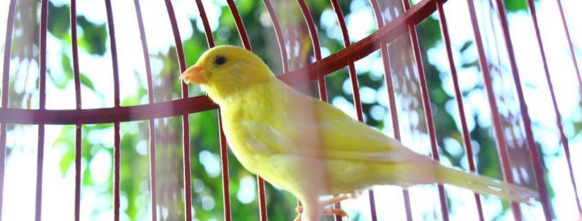 madár hamvasztás